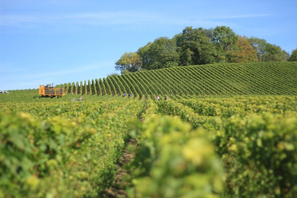 Head into Easley Winery - 6 Best Indianapolis Dating Ideas