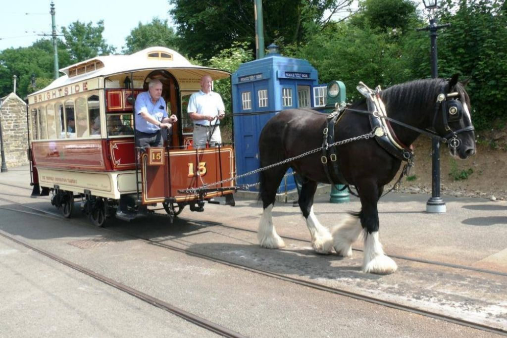 Ride the Louisville Horse Tram - Louisville Dating Ideas