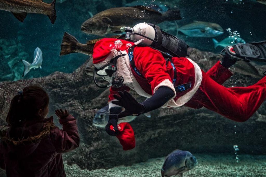 Check Out the Georgia Aquarium - Atlanta Dating Ideas