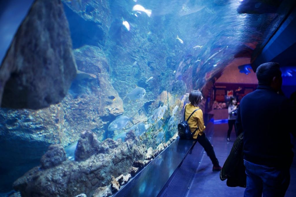 Check Out the Sea Life in Kansas City
