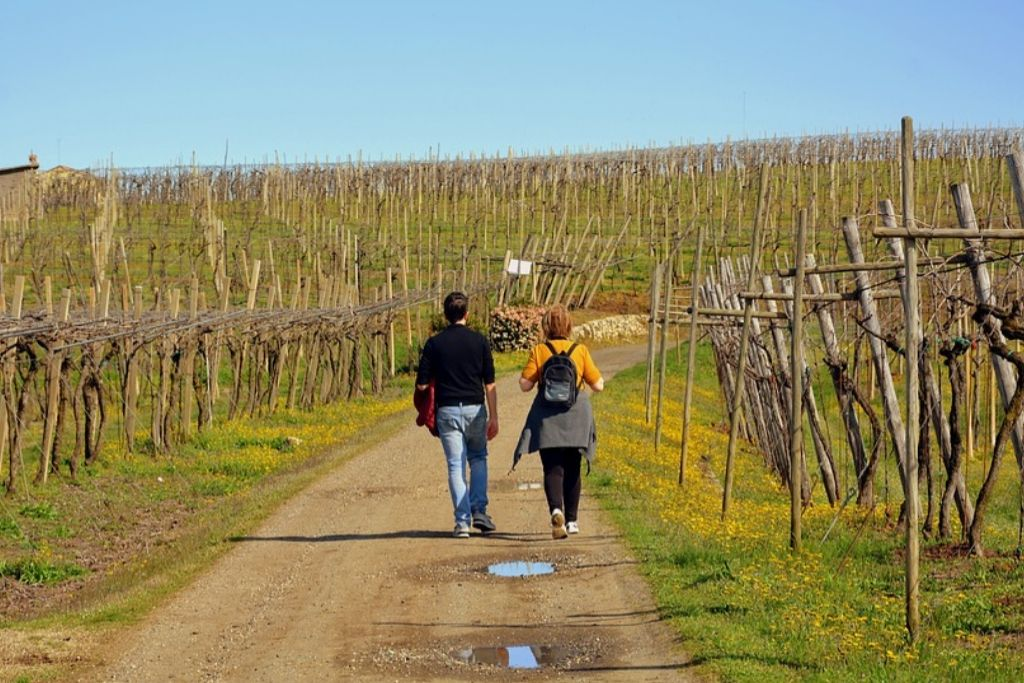 Sip Wine at Chateaux St. Croix Vineyard in Minneapolis