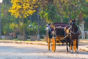 Horse Carriage Ride for Date in New Orleans