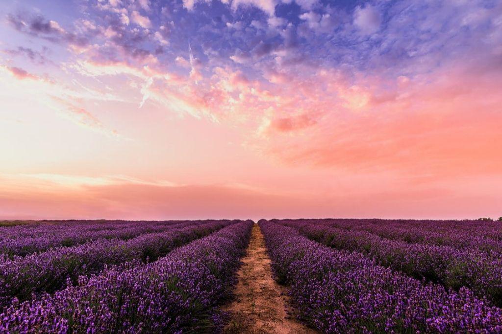 Visit Los Poblanos Lavender Farm - Albuquerque Dating Ideas